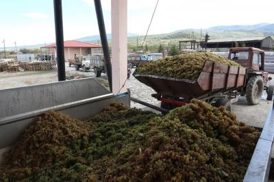 ღვინის ქარხნებში თაღლითობის ბრალდებით ყვარელში 4 პირი დააკავეს