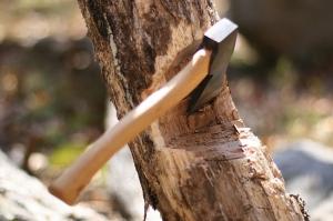 ხე-ტყის უკანონო ჭრაზე ჯარიმების ოდენობა გაიზარდა