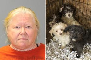 ამერიკელ ქალს სახლში 130 დატყვევებული და 44 გაყინული ძაღლი აღმოუჩინეს