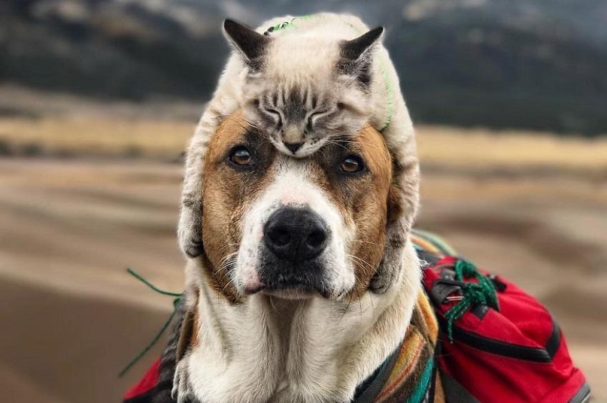 ჰენრი და ბალუ – ძაღლი და კატა, რომლებსაც ძალიან უყვართ ლაშქრობა