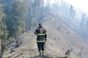 ბორჯომში ხანძრით დაზიანებული ტყის აღდგენა იწყება