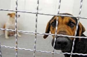 ძაღლის წამებით მოკვლაში ბრალდებული სასამართლომ 500 ლარით დააჯარიმა
