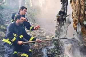 ზეკართან ტყეში ხანძრის ჩაქრობას 200 მეხანძრე ცდილობს