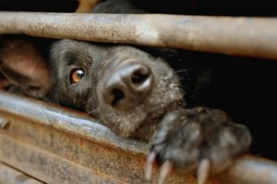 ძაღლზე ძალადობის ამსახველ ვიდეოს შსს სწავლობს