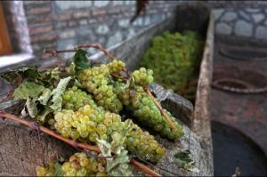 კახეთში 85 ათასი ტონა ყურძენია გადამუშავებული