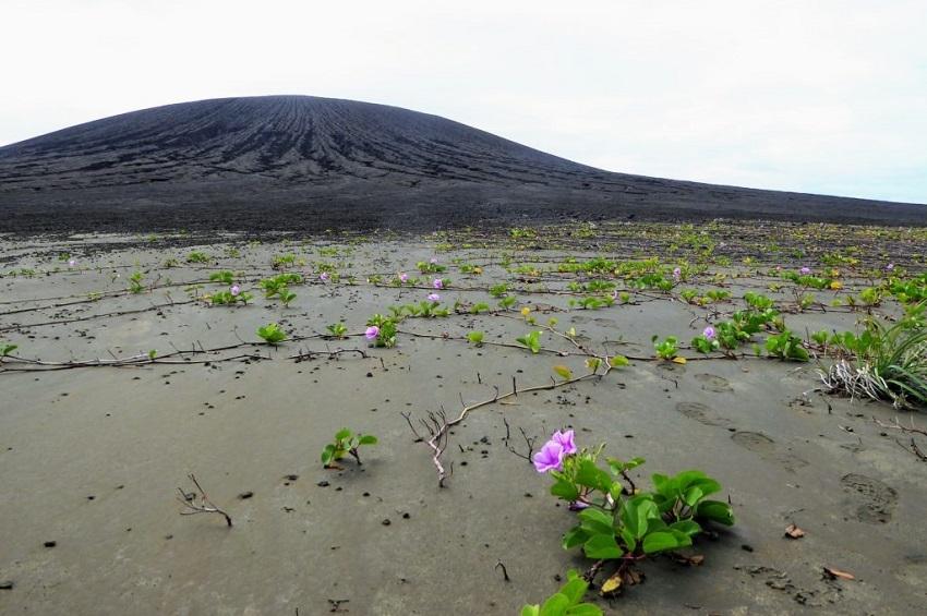 სიცოცხლით სავსე კუნძული რომელიც მხოლოდ ოთხი წლის წინ წარმოიქმნა