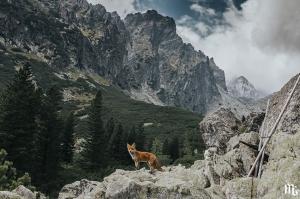 რა შეიძლება ნახოთ სლოვაკეთის მთებში