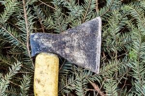პოლიციამ ახალციხეში უკანონოდ გაჩეხილი წიწვოვანი ჯიშის ხეები ამოიღო