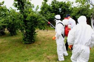 როგორ ავიცილოთ თავიდან თხილის დაავადებები - რეკომენდაციები ფერმერებს