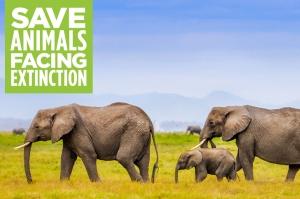 ბოლო 40 წელში ხერხემლიან ცხოველთა 60% განადგურდა