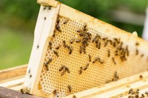 გორში თაფლის გადამამუშავებელი საწარმო 2018 წელს აშენდება
