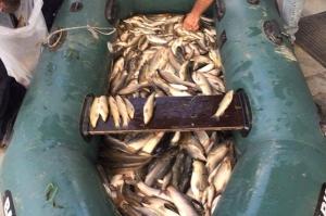 წალკაში ელექტროშოკური აპარატით 143 კგ თევზი დაიჭირეს [Photos]