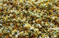 დუშეთიდან ფურისულას ყვავილი ექსპორტზე გერმანიაში გაიტანეს