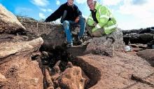შუა საუკუნეების სასაფლაოზე არქეოლოგებმა უცნაური ძუძუმწოვრის სამარხი აღმოაჩინეს