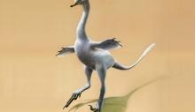 მონღოლეთში იხვის მსგავსი მომცრო დინოზავრი აღმოაჩინეს