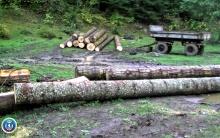 ხის უკანონოდ ჭრის ბრალდებით ერთი პირი დააკავეს
