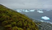 გლობალური დათბობის წყალობით ანტარქტიდამ გამწვანება დაიწყო