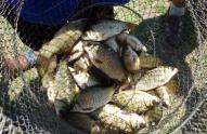 1-ლი იანვრის შემდეგ უკანონო თევზჭერის 433 ფაქტი გამოვლინდა