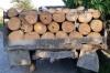 უკანონო ხე-ტყის გადატანის მფარველობის სანაცვლოდ ქრთამის აღებისთვის მოხელე დააკავეს