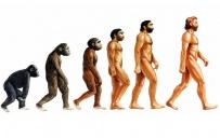 თურქეთში სასკოლო პროგრამიდან ევოლუციის თეორიას ამოიღებენ