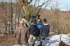 იმერეთში წაბლის ტყეების აღდგენა იგეგმება